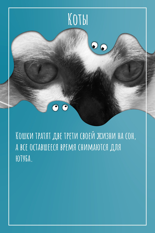 Кошки тратят две трети своей…
